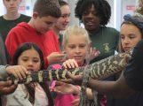 Elementary STEM Fair